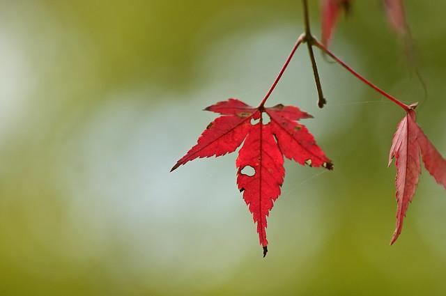 I feel autumn