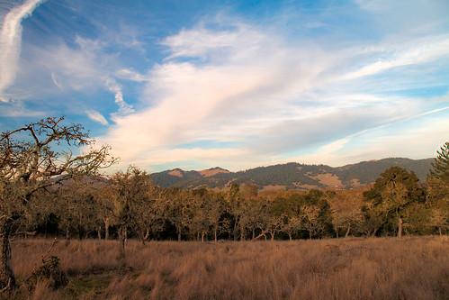 santarosa california us whisperingclouds stevenpmoreno campgrounds nature stevenmorenospix2018 outdoor sonomacounty field grove trees grass northerncalifornia canond70 blue
