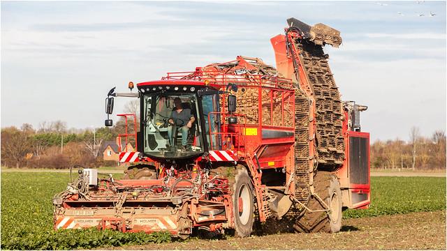 Harvesting Sugar Beet...