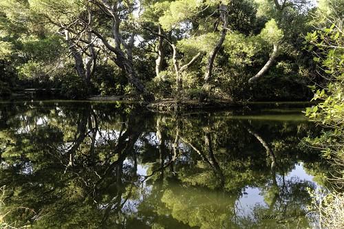 marseille méditerranée paysage landscape lacs lumierre lake nature nikon d850 reflet eau arbre view bouchedurhone tree