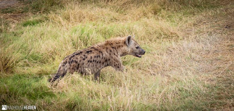 Kenya - 0741