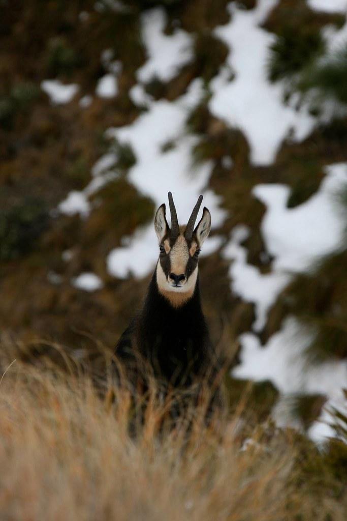 New Zealand Free Range Hunting - Marlborough - Antlers