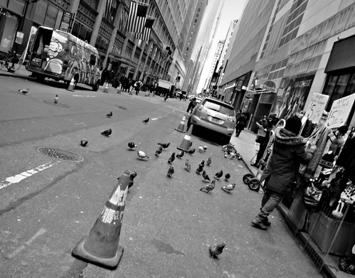 Pigeonhattan   by Robert S. Photography