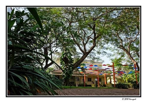 harrypwt nigeria fujix70 x70 borders framed abuja maitama backyard trees nature