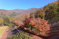 大川ダム建設前の旧・会津線はこのあたりを通っていたようだ