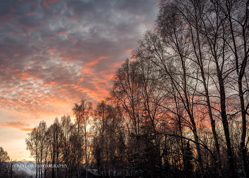 alaska trees birch winter backyard mountains colors sunrise anchorage clouds unitedstatesofamerica us