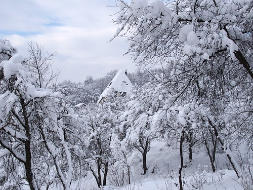 meseerdő, meseház / forest fairy house | by debreczeniemoke