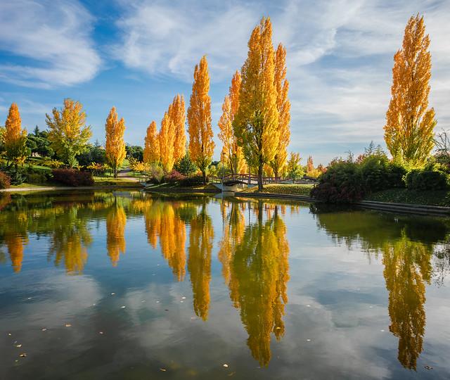 Autumn colors. Tres Cantos, Madrid [Explore 14/11/18]