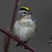 Steider Studios.Little Birds.1.5.19