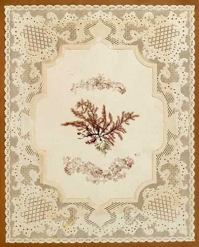 003-Album de algas marinas-1848- Brooklyn Museum Library | by ayacata7