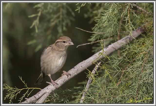 Petit oiseau de Camargue (2)