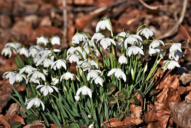 Spring is on the way.