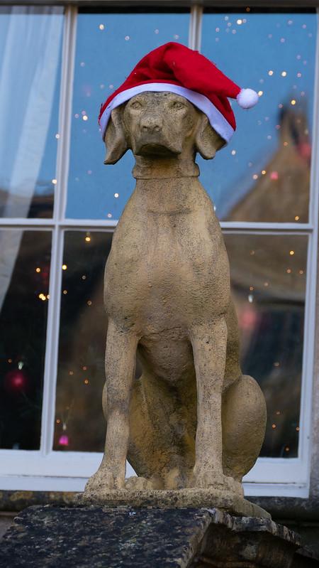 Christmas hound