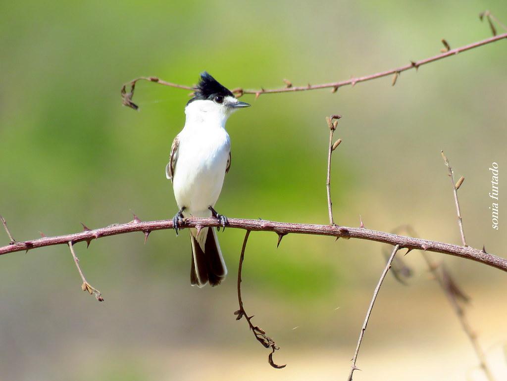 Terça-Natureza (pássaros)
