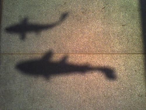 shadow fish