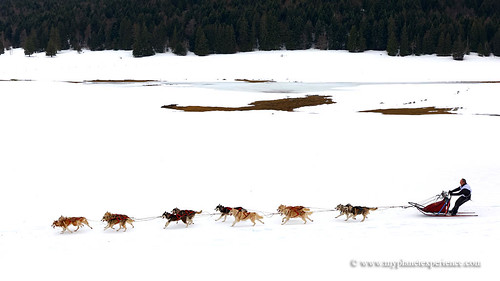 Sled dog race | by My Planet Experience