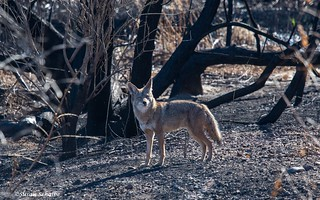 Hunting in the burn zone | by Photosuze