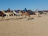 Festival International du Sahara: závod velbloudů, foto: Petr Nejedlý