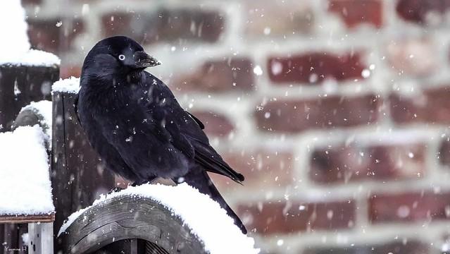 Bird - 6439