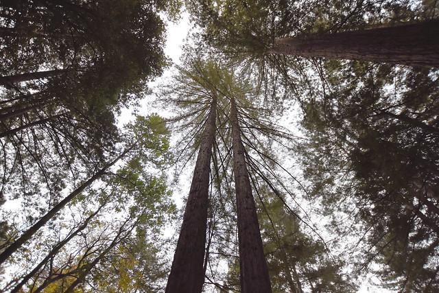 California - XIX