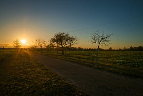 sonne licht baum bäume feld felder acker landschaft iffezheim feldweg weg wege pfad himmel warmeslicht gelb bunt blätter wiese gras gräser natur sonnenuntergang obstbäume horizont himmelskörper strahlen