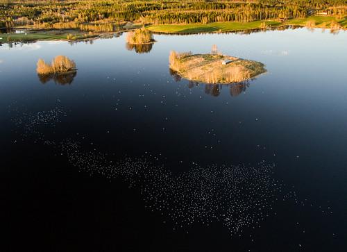 birds gulls landscape lake spring