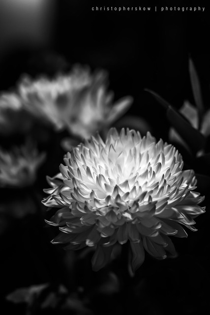 Day 1 Flower
