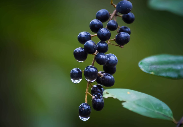 Berries with Water Drops