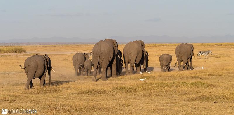 Kenya - 0054
