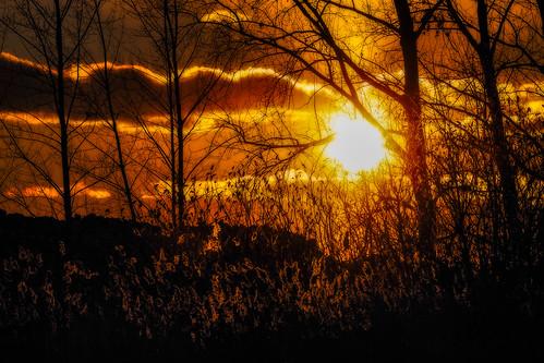 2019 canada coucherdesoleil exterior extérieur golfdoval hiver janvier lightroomcc michelguérin nature nikon nikonafsnikkor200500mmf56eedvr nikond500 qc québec sunset technoparcmontréal arbres dorval ca