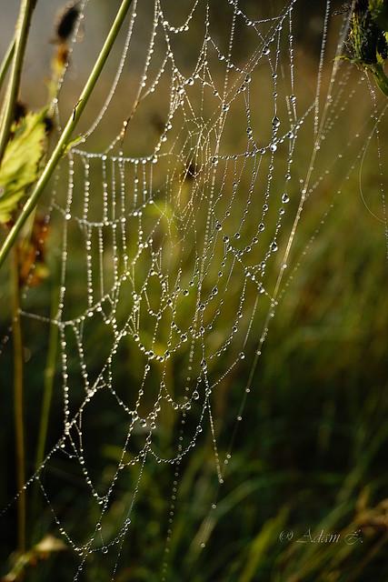 Pajęczyna / cobweb
