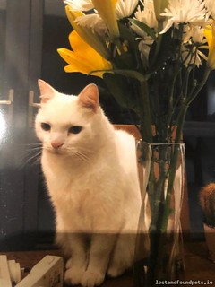 [Reunited] Wed, Jan 23rd, 2019 Lost Male Cat - Ashfield, Templeogue, Dublin