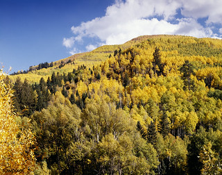 Colorado Aspens. Original image from Carol M. Highsmith's America, Library of Congress collection. Digitally enhanced by rawpixel.