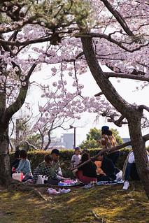 Himeji Castle Hanami - Himeji, Japan   by inefekt69