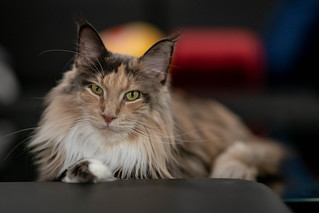 030 - cats cats cats- B9504135 | by NEX69
