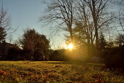 365the2019edition 3652019 day4365 04jan19 pro ni d3200 sunrise morning trees sun shadows