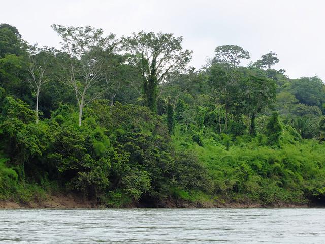 Regenwaldreste längs des Usumacint, Grenzfluss zwischen Guatemala und Mexiko