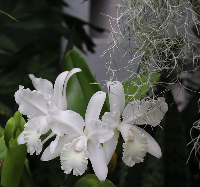Orchid 06 02-02-19