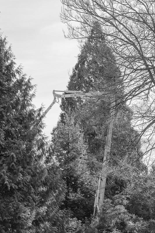 Concrete Pump in Trees