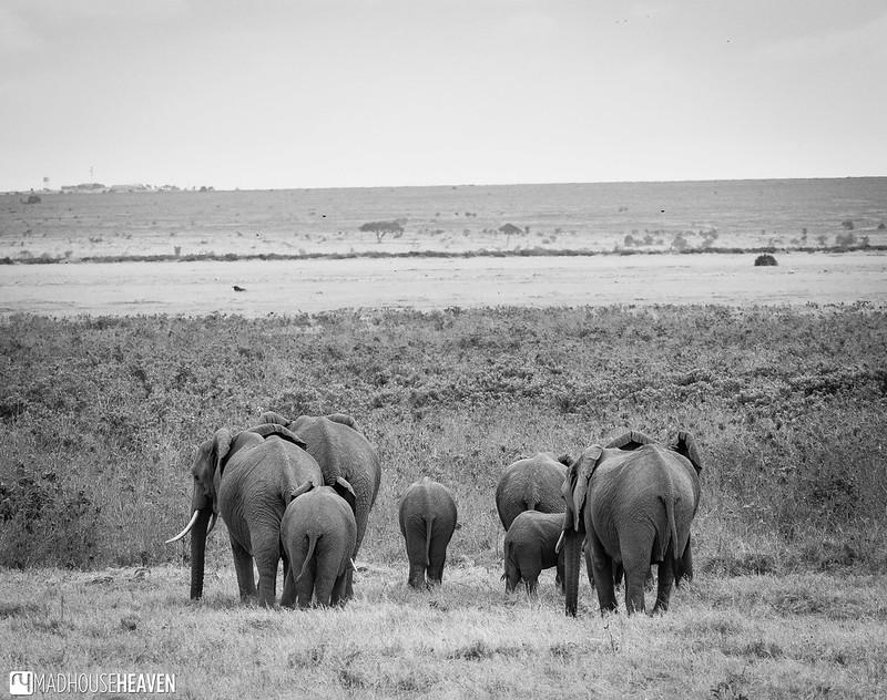Kenya - 0290