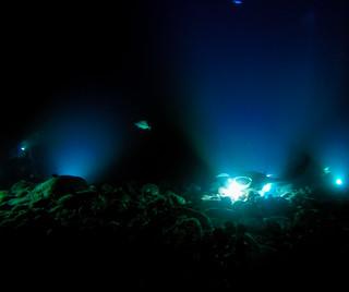 Manta Nachttauchgang Big island Hawaii