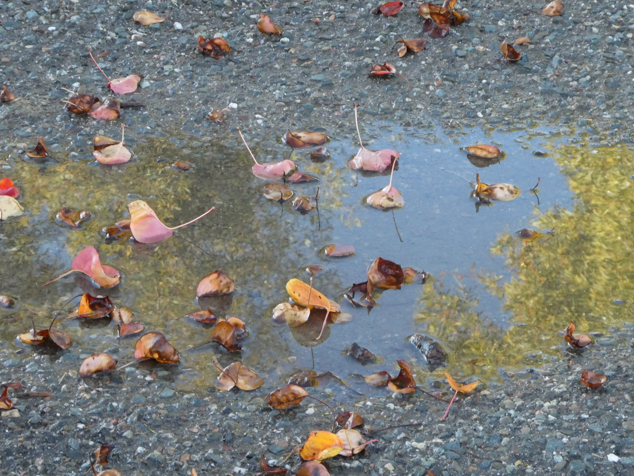 2018-11-22 - After the rain!