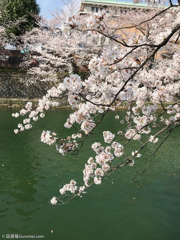 打工度假-京都生活-賞花、野餐-017