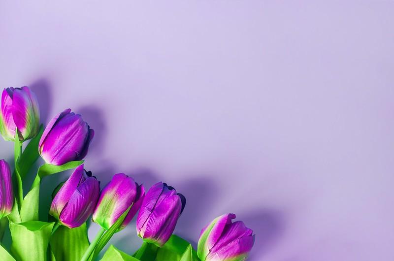 Обои фиолетовый, цветы, фон, тюльпаны, flowers, tulips, purple картинки на рабочий стол, раздел цветы - скачать