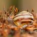 L'escargot by Gisou68Fr