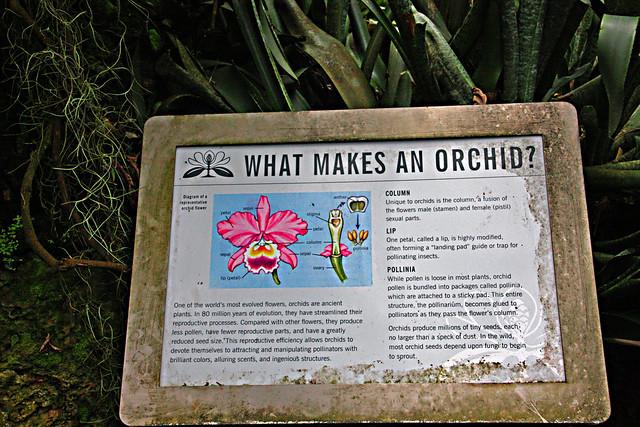 Atlanta Botanical Garden, What Makes An Orchid, Atlanta, GA (34 of 36)