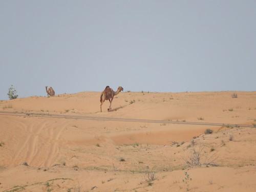 Langs de weg tussen Dubai en Dibba