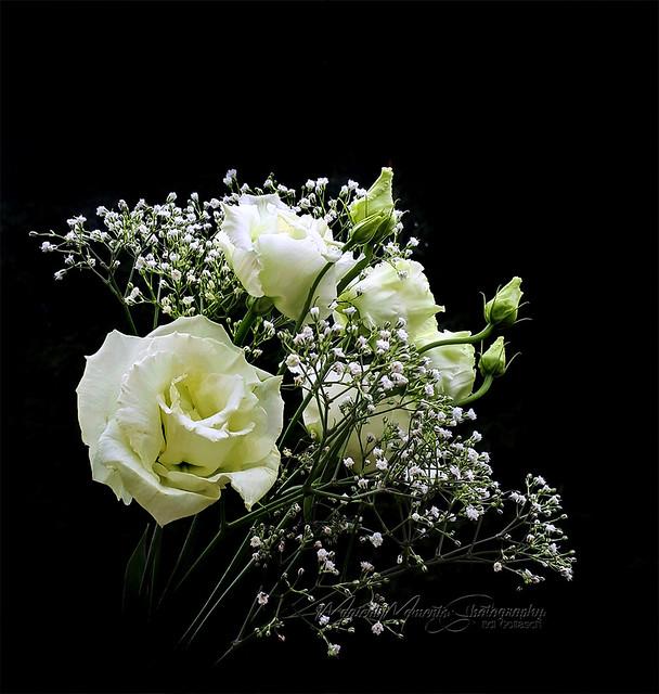 An elegant, filigree cut flower