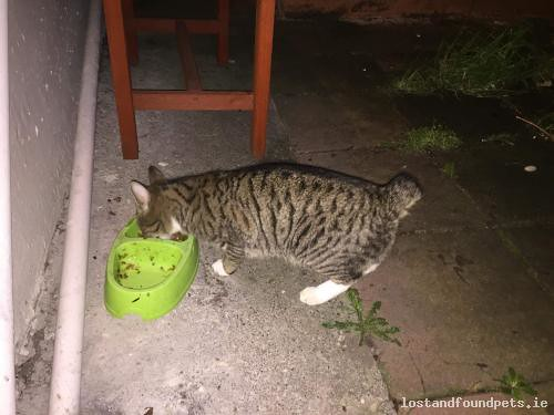 Sat, Dec 29th, 2018 Lost Male Cat - R110, Dublin 12