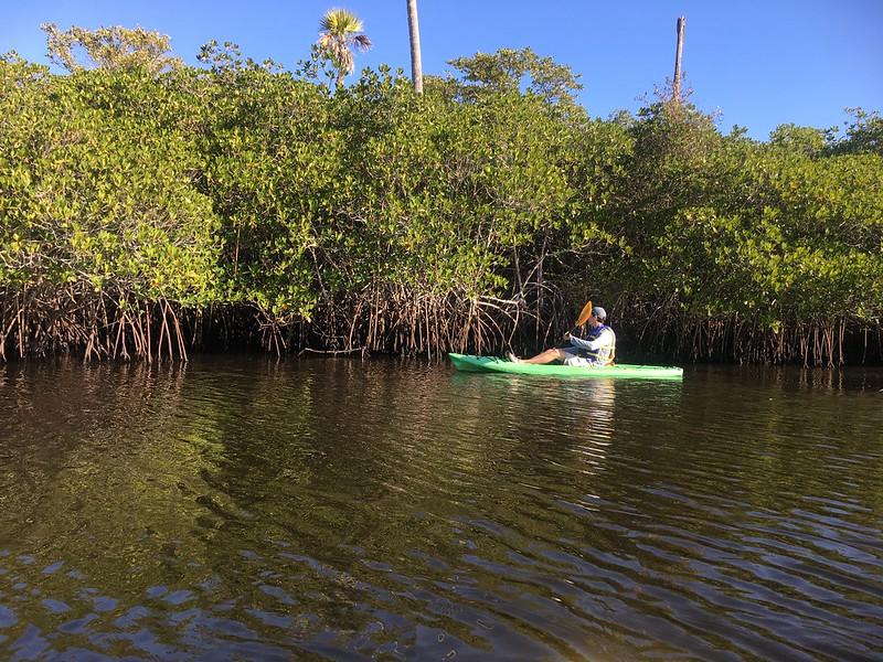 Loxahatchee mangroves